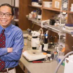 Patrick Hu, MD, PhD, identified a previously unknown step in insulin synthesis, providing new clues to diabetes pathogenesis. (photos by Susan Urmy)